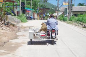 タオ島でレンタバイク