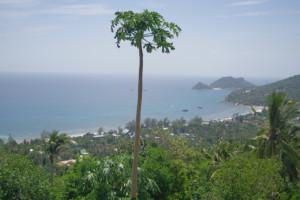 タオ島の景色