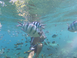 プルフンティアン島でシュノーケリング。FishPoint/世界一周わくわく教室