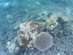 プルフンティアン島でシュノーケリング。CoralPoint。綺麗な珊瑚礁/世界一周わくわく教室