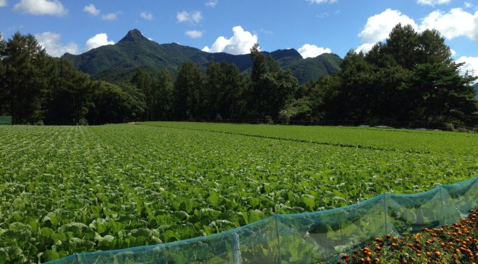 農民生活八週間〜のんびり川上村を歩こう〜