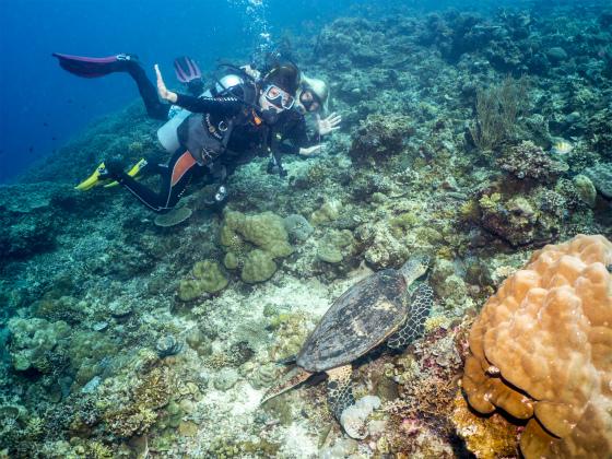 なんと!?ダイビング中にウミガメ発見
