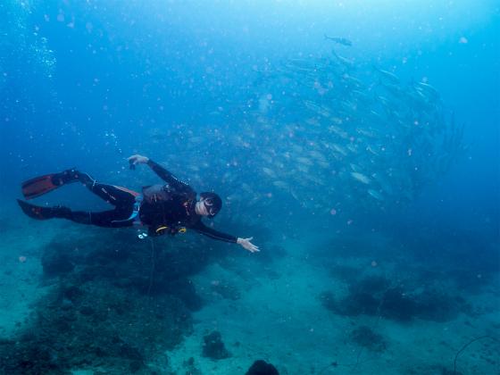 エルニドで魚群と一緒に泳ぎました