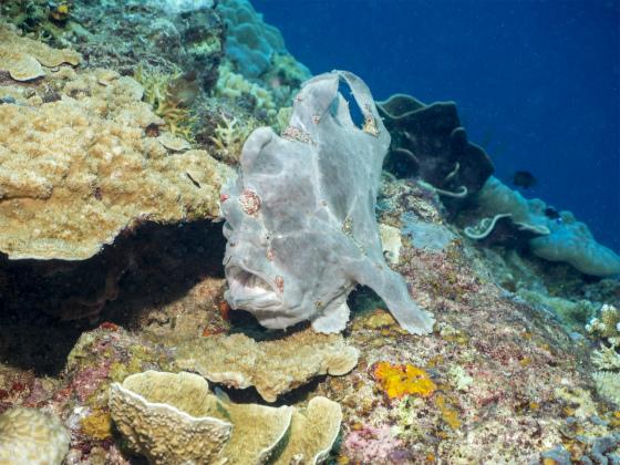 ダイビング中に変な魚発見