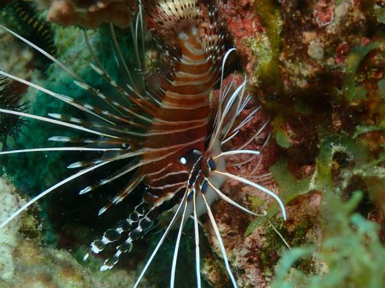 ロンブロンの海の生物