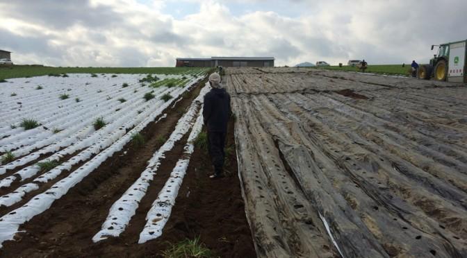 農民生活六週間〜土まみれのマルチはがし〜