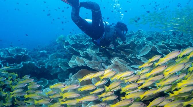 エルニドでダイビングしたら最高の景色が目の前に広がってた〜死ぬまでに1度は潜りたい場所〜